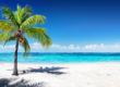 Tropical beach with striking waters, white sand and a coconut palm tree
