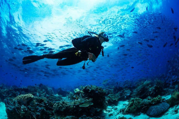 Woman diving into the depths of the ocean among the coral reefs and sea life.