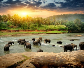 A group of elephants in Sri Lanka's jungle as the sun is starting to set
