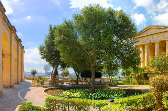 The flora and fauna in Barrakka Gardens Valletta Malta