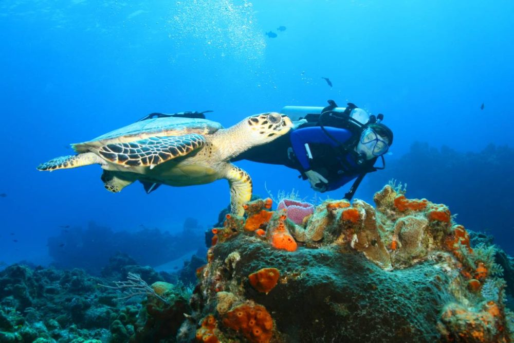 Scuba diving with turtles in Mexico